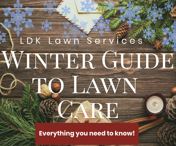 Winter Guide To Lawn Care Ldk